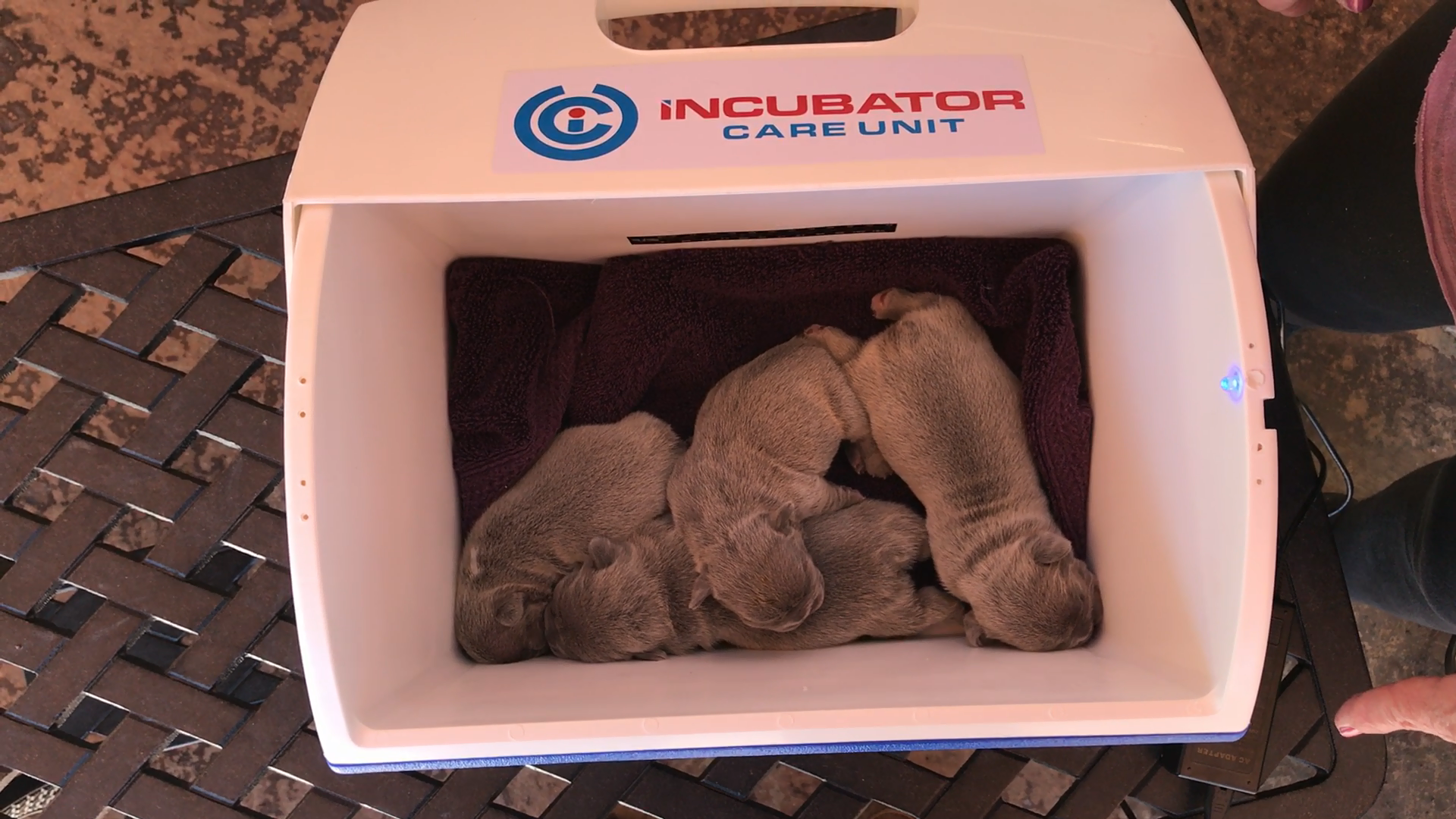 Incubator Care Unit – Love My Pups