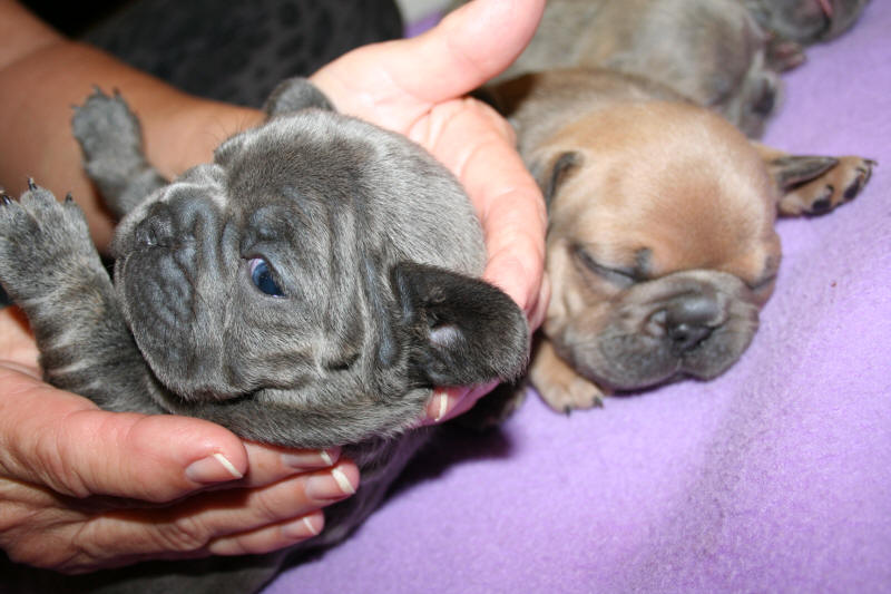 Love My Pups – We raise loving puppies in a family environment